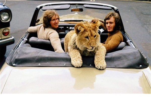Harrod's Pet Kingdom sold lions like this one until 1976. (WILDLIFE)