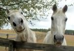 Millcreek Farm 2 Horses flikr
