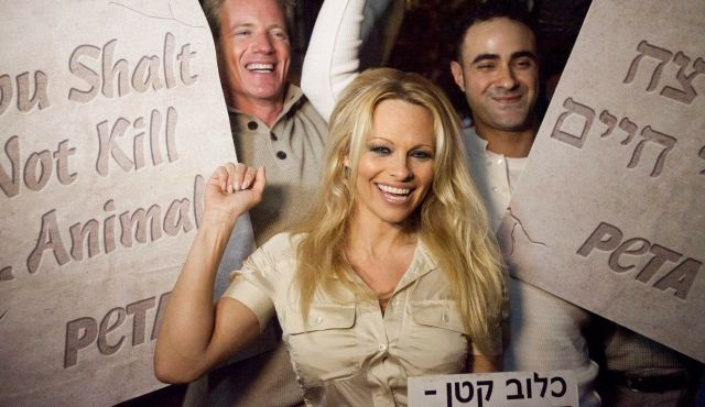 Actress and animal rights activist Pamela Anderson asks Israel Prime Minister Benjamin Netanyahu to endorse Photo credit: jewsnews.co.il