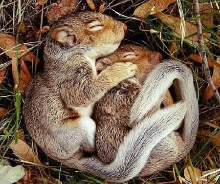 Squirrel Appreciate Day is a time to be thankful for all types of squirrels. (WILDLIFE)