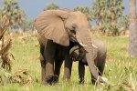 Sudan Elephants