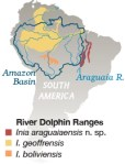Dolphins, River Dolphins, new species, species, animals, brazil