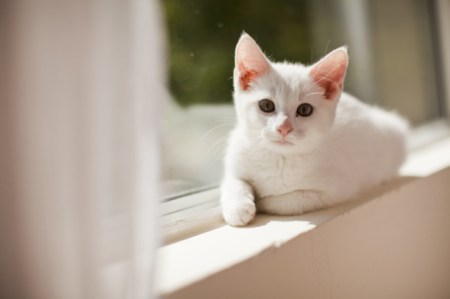 Kidney failure in cats can at times be irreversible. Photo Credit: AE Pictures Inc. via Getty Images