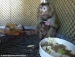 ADI South Korean Monkey School Animal Abuse