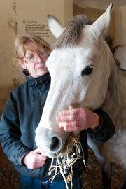 horses, scotland, uk, pony, grey lady