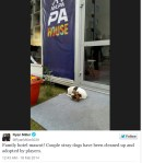 Ryan Miller Twitter, tweets picture of stray dog in Sochi Russia