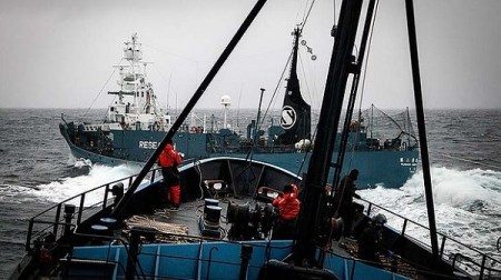 The Yushin Maru before it collided with the Bob Barker on Sunday. Photo Credit: Reuters (SEA SHEPHERD/WHALING)