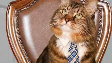 Hank the cat, Senate, Virginia, animals who have run for office, politics