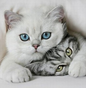 Cuddling, Kittens, Cute Animal Pictures, Love, Valentine's Day