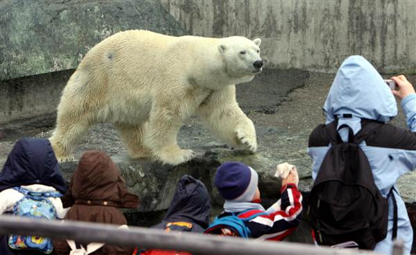 Zoos, Polar Bears, Anton, Polar Dies in German Zoo, Animal right, animal cruelty