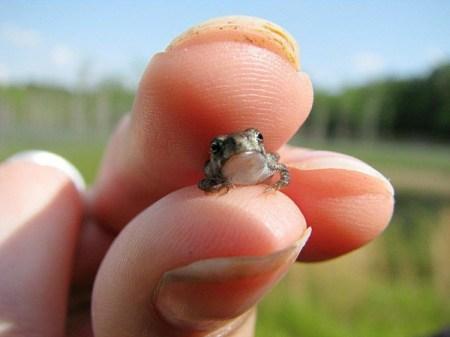 mini animals, tiny animals, baby animals, rare animals, exotic animals, frogs, pictures of animals