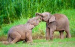 mini animals, tiny animals, baby animals, rare animals, exotic animals, elephants, pictures of animals