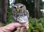 mini animals, tiny animals, baby animals, rare animals, exotic animals, owls, pictures of animals