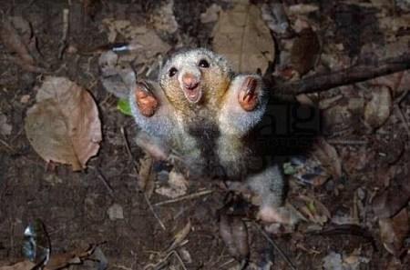 mini animals, tiny animals, baby animals, rare animals, exotic animals, anteaters, pictures of animals