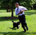 Obama, President, White House, Dogs, Celebrity Dogs, Cute Animal Pictures