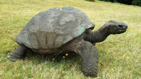 Jonathan the tortoise. Photo Credit: BBC News