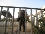 Elephant at Kharkiv Zoo