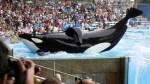 Orca SeaWorld
