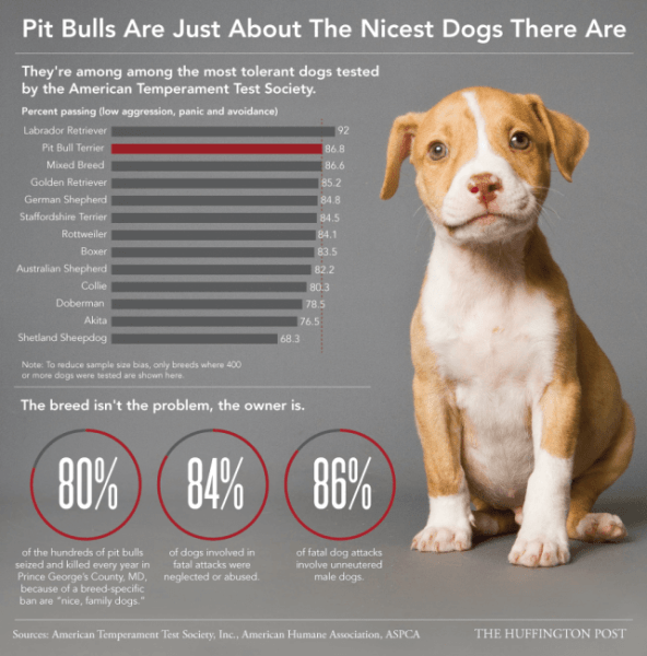Pit Bull Temperament Test - Dog Aggression Chart