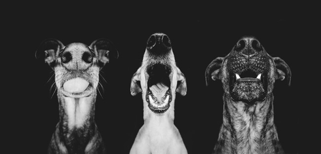 dogs, pictures of dogs, animals, pictures of animals, pets, photography, animal photography, elke vogelsang, germany