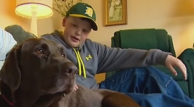 dogs, pets, washington mudslide, washington, darrington, animals, pictures of pets