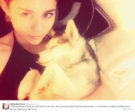 'I don't wanna say it because I don't want it to be real... But my precious baby Floyd has passed away. I am broken' Miley Cyrus announces her dog Floyd died on Twitter./Photo credit: @MileyCyrus via Twitter