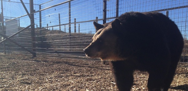 PETA, Bears, Sanctuary