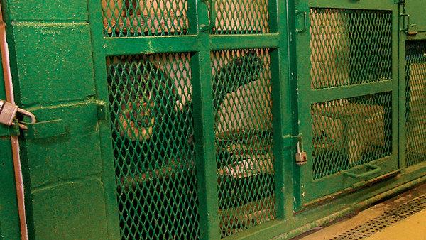 Chimpanzee, Captive animals, captive primates, monkeys