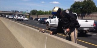 CHP officer saves Chihuahua from Highway Divider