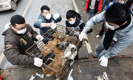 Over 10,000 dogs are killed and eaten during the annual dog-eating festival in China. Photo credit: Barcroft Media