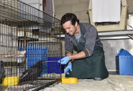 The Fund for Animals Wildlife Center, Ian harding, Wildlife, Pretty Little Liars, Animal Rehab, Rehab Centers, Red-tailed Hawks