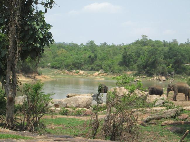 Sunder enjoys his newfound freedom at the elephant sanctuary. Photo credit: PETA