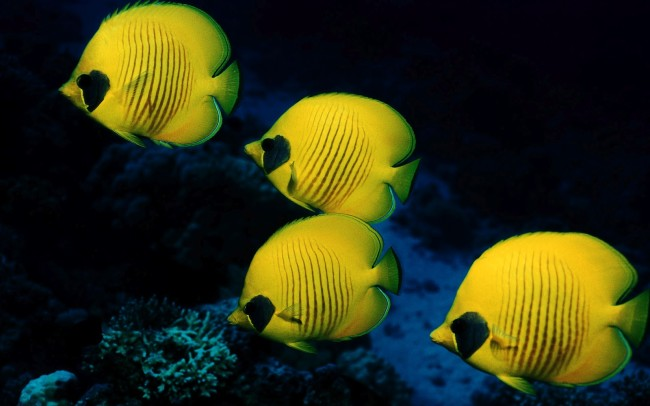 Fish have a better sense of smell than than humans. Photo credit: Wallpapersscreensavers.blogspot.com