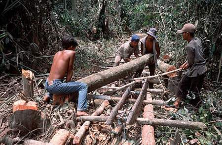 Illegal logging poses one of the biggest threats to environmental destruction. Photo credit: WWF
