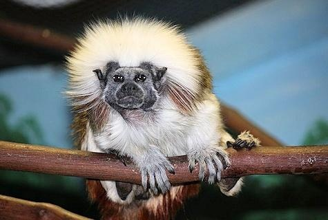 The monkeys possibly died from shock, heat stroke, or toxic air. Photo credit: KTVZ