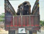 Raju Rescued in Truck