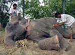 Raju being treated