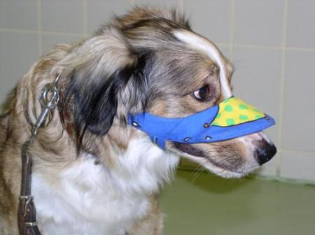 You can protect your pet's nose from sun damage with a custom-made umbrella. Photo credit: Vetmeduni Vienna