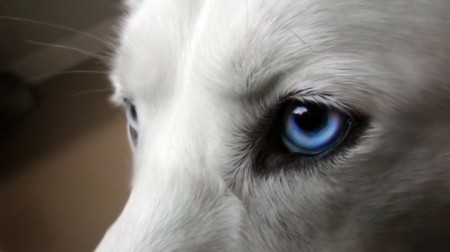People can distinguish which dog belongs to which owner based off their eyes. Photo credit: wall321.com