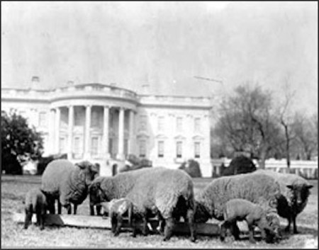 Pets, life with pets, Woodrow Wilson, Past presidents, sheep
