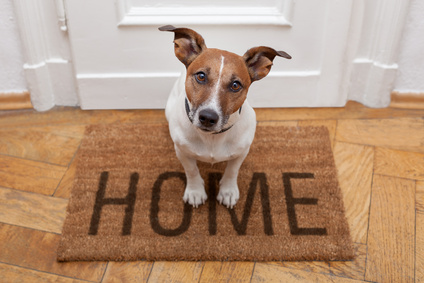 Being exposed to dogs early in life can decrease one's risk of asthma by 13%.