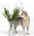 Easter Lily And Cat