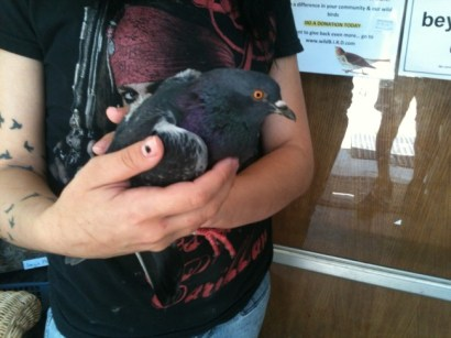 A person saved an injured and starving pigeon by using the Animal Help Now app. Photo credit: Animal Help Now