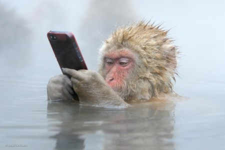 Wildlife, gallery, wildlife gallery, wildlife photographer of the year, competition. iHone, monkey, cellphone