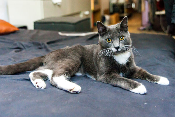 Mr. Robinson was arrested for kicking King, a stray cat. Photo credit: ASPCA