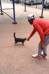 Mr. Robinson lured the stray cat toward him with treats before proceeding to violently kick him. Photo credit: BuzzFeed