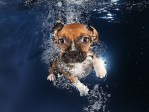 Puppies, dogs, cute pictures, cute animal pictures, cute puppies, puppies swimming
