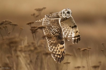Wildlife, gallery, wildlife gallery, wildlife photographer of the year, competition, owl