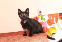 Kittens, rescue kittens, adopt a kitten, heartwarming tales