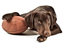 Footballs can be fun toys for your pets as well! Photo credit: Your Hub